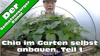 Chia selbst im Garten anbauen. Teil 1