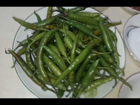 কাঁচা মরিচের আচার    Green Chili Pickle    Shirin's Kitchen
