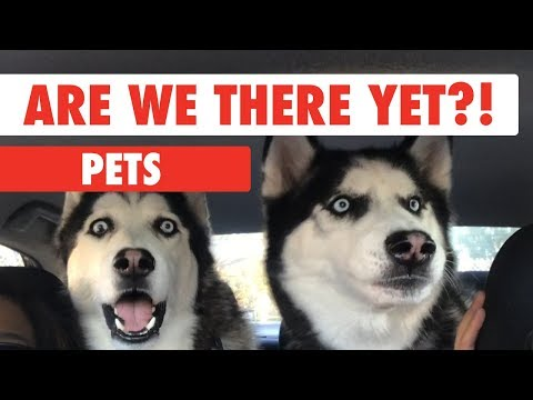Are We There Yet Pets