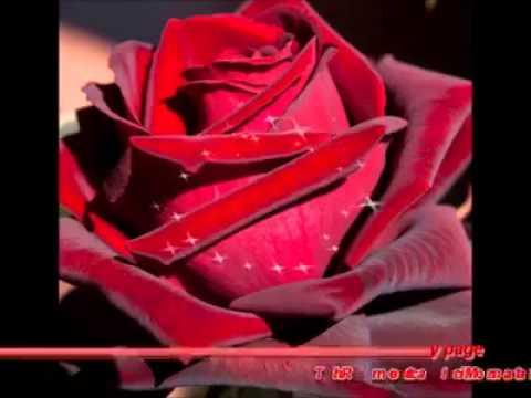 Youtube - Fotos flores preciosas ...