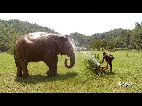 Elephant Nature Park Pamper a Pachyderm Full Day Chiang Mai 13 MAY 2017 Eken H8 Plus