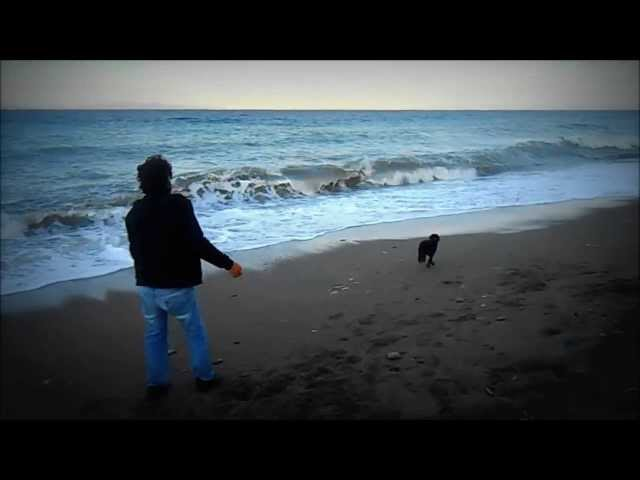 Εκπαίδευση σκύλων | Κοινωνικοποίηση της Ziggy 2