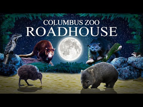 zoo-tours-ep.-45:-the-roadhouse-(nocturnal-house)-|-columbus-zoo