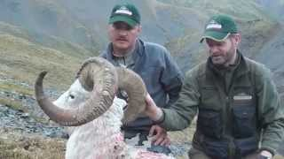 Brad Bartlett, Dall Sheep.mov