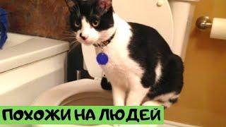 Ситуации, в которых кошки ведут себя как люди