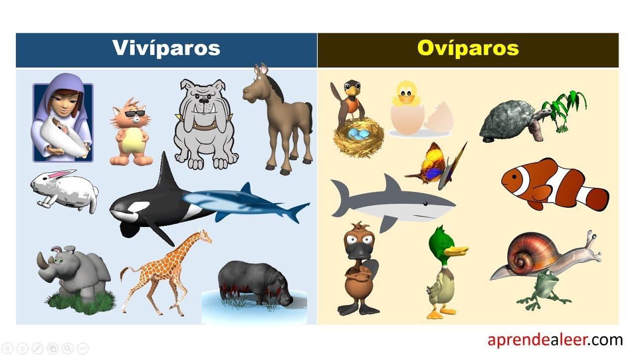 Animales viviparos y oviparos para niños de primaria - YouTube