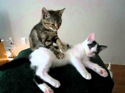 Cats Massaging Each Other Gif