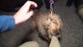 RAW Dog Attacks Cameraman, Gets Tasered