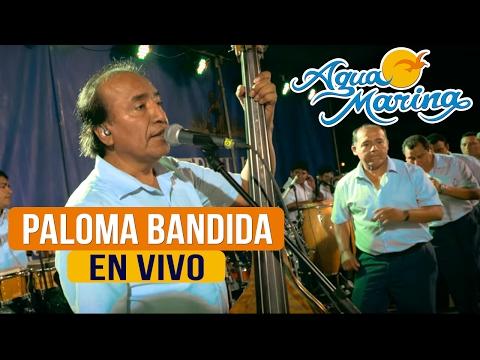 Agua Marina - Paloma Bandida (En Vivo)