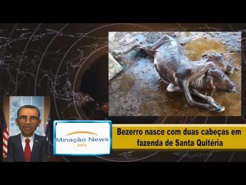 Bezerro nasce com duas cabeças em fazenda de Santa Quitéria