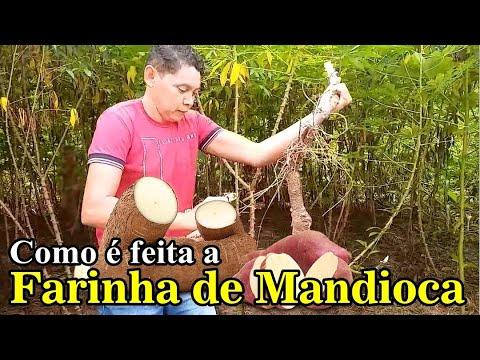 Farinha de Mandioca em Boca do Acre   Amazônia