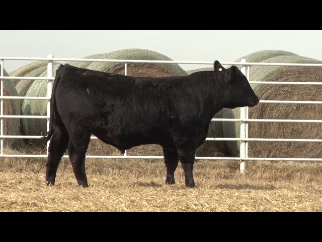 Express Ranches Lot 455