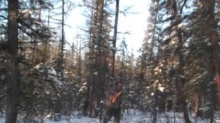 Охотник на соболя с лайкой видео
