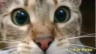 Funny Cat watching horror tv movies complete compilation 2017
