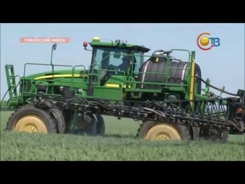 Как правильно проращивать пшеницу для еды ::