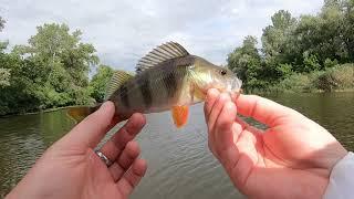 ПРИМАНКА которая ловит на КАЖДОМ ЗАБРОСЕ Рыбалка на окуня и щуку летом 2021