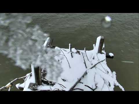 Osprey Nest - Chesapeake Conservancy Cam 03-21-2018 07:49:54 - 08:49:55