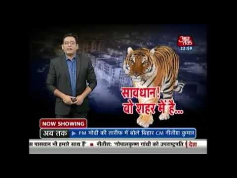 Pilibhit me bagh ka kauf/aaj tak news/pilibhit tiger reserve