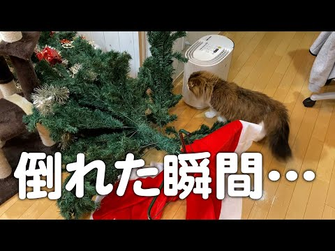 猫によるクリスマスツリー被害状況。ついに倒壊しました