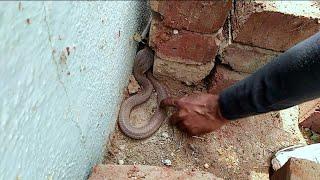 देखिये कहां छुपा बैठा ये कोबरा साप, इस वीडियो को पूरा देखिये | Rescue indian cobra snake Ahmednagar