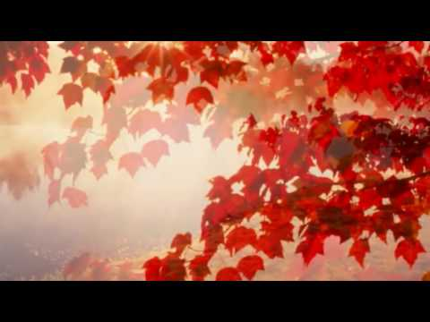 101 STRINGS ORCHESTRA   AUTUMN LEAVES