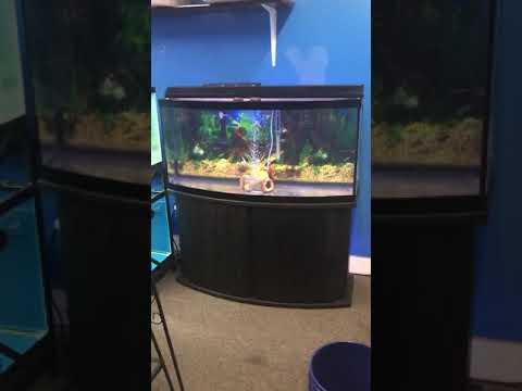72 Gallon Bowfront Aquarium Fish Tank Complete Set Up $400