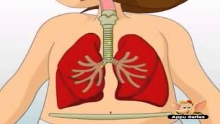 * Μαθαίνω για το αναπνευστικό σύστημα -βίντεο για παιδιά (ελληνικοί υπότιτλοι)