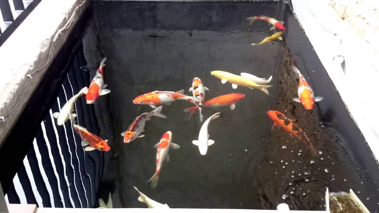 Small koi pond with diy filter youtube for How to build a small koi pond