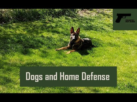 Dogs and Home Defense