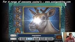 Online Slots Bonus Compilation! (Book Of Dead, Rainbow Jackpots, Wild North & More!)