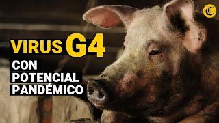 G4 Ea H1n1: China Descubre Virus De Gripe Porcina Propicio Para Una Nueva Pandemia