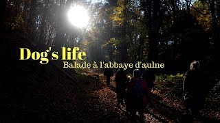 Dog's Life : Balade à l'abbaye d'aulne