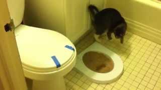 Как приучить кота к туалету. Шаг 1.CitiKitty