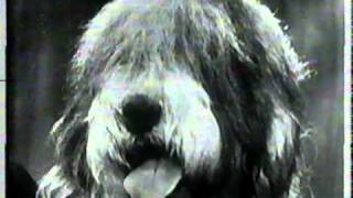 """Bob & Ray. """"Westminster Dog Show Contestant Interview"""""""