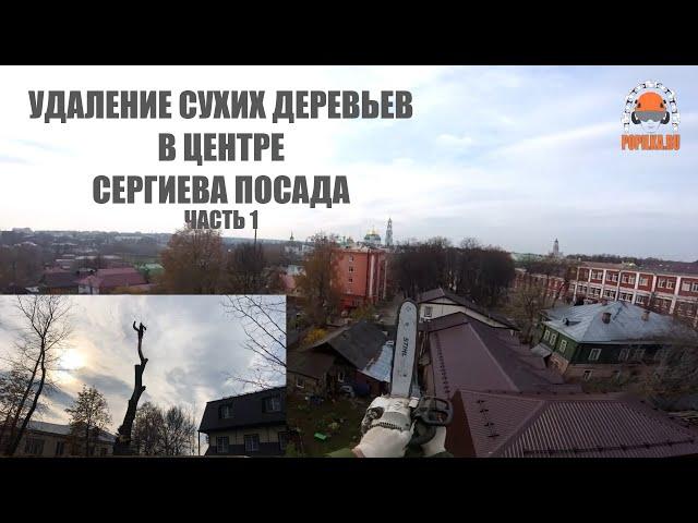 Спиливание сухих вязов в историко художественном музее г Сергиев Посад