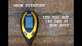 Grow Potatoes  It's too hot for pots, It could be terminal.