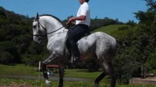 os melhores cavalos do brasil!!