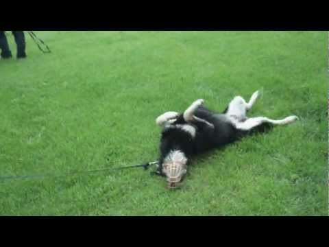 conor-rolling-in-the-grass