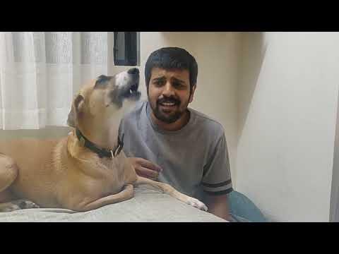 Una perra canta junto a su dueño y es furor por su interpretación a dúo
