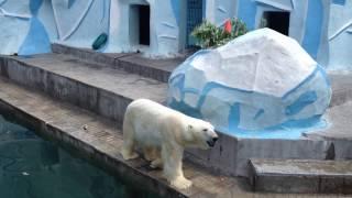 Новосибирский зоопарк. Novosibirsk Zoo.