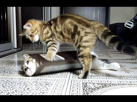 Youtube Ninja Cat Box