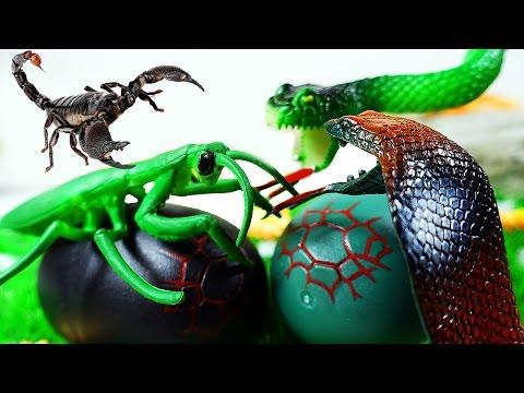 ЯЙЦО ЗМЕИ! БИТВА ЗМЕИ и НАСЕКОМЫХ! Животные Змея Насекомые мультик для детей на русском ИГРУШКИ ТВ
