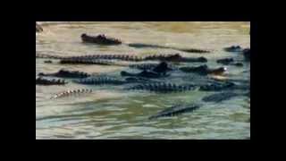 Billy El Exterminador - Rodeado por cocodrilos