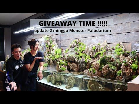 giveaway-50rb-subs-!!!-update-2-minggu-mega-paludarium-di-kantor-baim-wong,ganti-tanaman-guys-!!!!