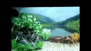 Artificial Planted Aquarium In Chennai Design By Jabbar.cell 9840717497 Aquarium Design India