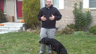Teach Your Dog To Speak On Command