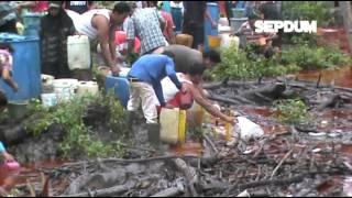 Tanki Timbun Ambruk, 3000 Ton CPO & PKO PT. IBP Jadi Rebutan Warga