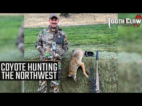 Coyote Hunting The Northwest
