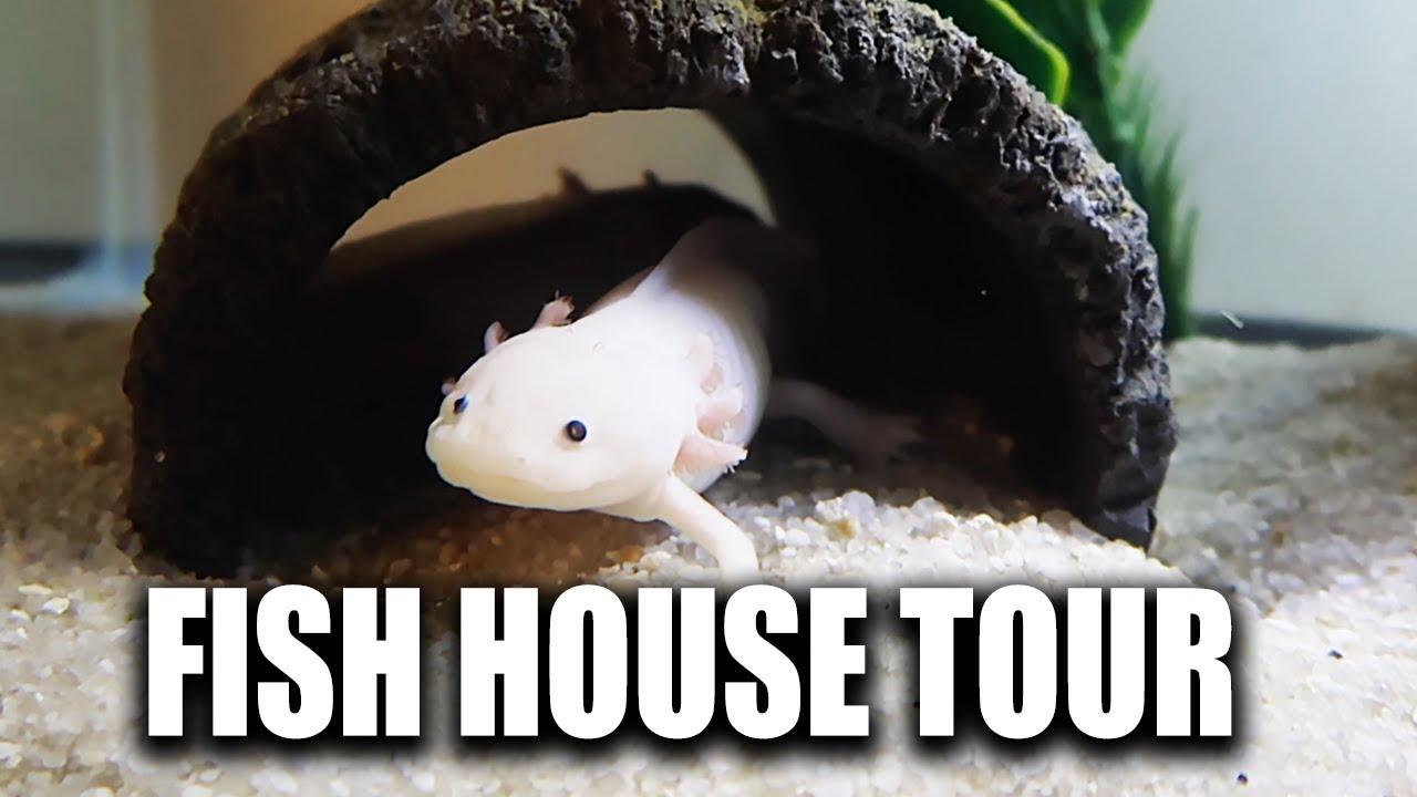 fish-house-tour-of-solid-gold-aquatics