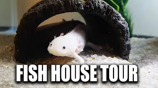 FISH HOUSE TOUR of Solid Gold Aquatics